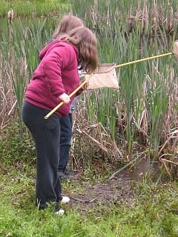 Wir untersuchen den lebensraum teich blog archiv for Wassertiere teich